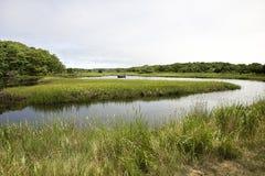 小船在沼泽 免版税库存图片