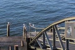 小船在莱茵河的栈桥 免版税库存图片