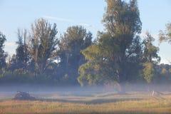 2009年小船早期的有雾的湖早晨拍摄了俄国春天日出 免版税库存图片