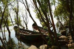 小船树湖 库存照片