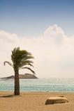 小船棕榈树 免版税库存照片