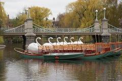 小船波士顿公用天鹅 库存照片