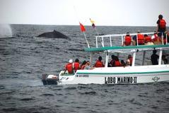 小船注意的鲸鱼 库存照片