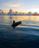 小船渔夫他的本机荡桨日出 免版税库存照片