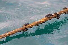 小船相接的绳索 图库摄影