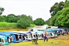 小船终端在Tortuguero国家公园,哥斯达黎加 库存照片