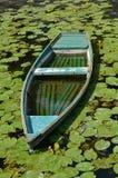 小船,百合 库存照片