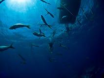小船水下潜水的水肺 免版税图库摄影