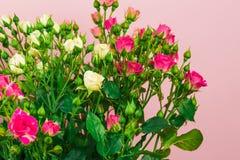 小色的玫瑰花束在一玫瑰色背景影像的 免版税图库摄影