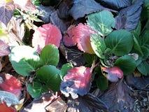 小色的花在施托尔科市镇在GermanySmall上色了叶子在城市 免版税库存照片