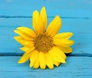 小花黄色向日葵 库存照片
