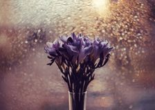 小苍兰美丽的花束在窗口的背景的 发光的金bokeh 在花瓶的明亮的蓝色紫色小苍兰 免版税库存图片