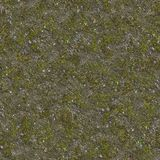 小草和石头在土壤 免版税库存图片