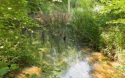 小草甸在美丽的森林里 库存照片
