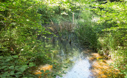 小草甸在美丽的森林,瑞士里 免版税图库摄影
