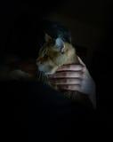 小荷兰样式 拿着一只大猫的妇女 葡萄酒 图库摄影