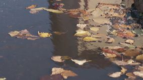 小落叶慢慢地移动水坑水表面上 股票录像