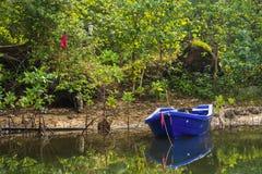 小蓝色小船在一条小运河停放了在美洲红树前面 免版税库存照片