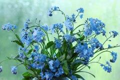 小蓝色野花露水 库存图片