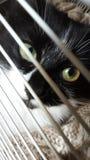 小蓬松小猫关在监牢里 免版税库存照片