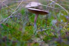 小蘑菇伞菌温暖的秋天 免版税库存照片