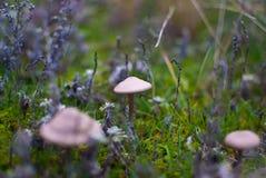 小蘑菇伞菌温暖的秋天 库存图片