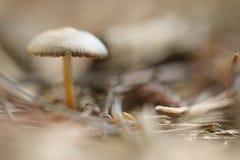 小蘑菇伞菌 库存照片