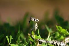 小蛇 免版税库存照片