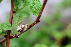 小蜗牛2 库存照片