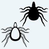 小蜘蛛臭虫 免版税库存照片