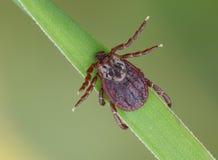 小蜘蛛 免版税库存图片