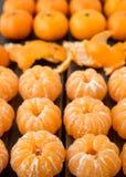 小蜜桔或柑桔品种  免版税图库摄影
