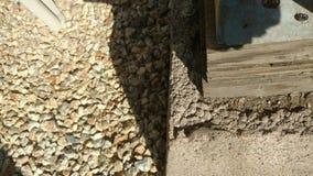 小蜥蜴camofloge水泥 免版税库存图片