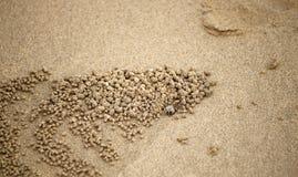 小螃蟹的沙子 库存图片