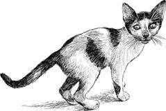 小被察觉的小猫 免版税库存照片