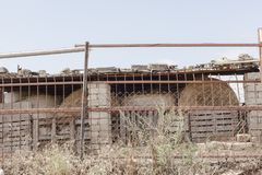 小被放弃的谷仓 库存图片