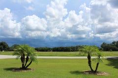 小装饰棕榈树 库存照片