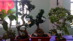 小设计的树 库存照片