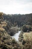 小谷的河与在双方的许多树 免版税库存图片