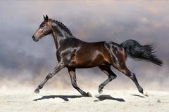 小跑在沙漠的马 免版税库存照片