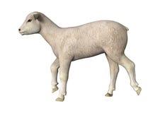 小跑羊羔 皇族释放例证