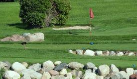 小路线的高尔夫球 库存照片