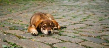 小路面的小狗 库存图片