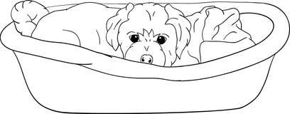 小轻便小床位于的小狗 库存照片