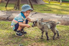 小逗人喜爱的男孩喂养一只小新出生的山羊 图库摄影