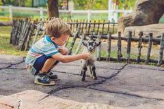 小逗人喜爱的男孩喂养一只小新出生的山羊 库存照片