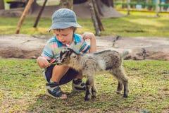 小逗人喜爱的男孩喂养一只小新出生的山羊 免版税库存图片