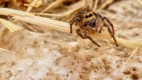 小逗人喜爱的蜘蛛 免版税库存图片
