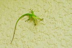 小逗人喜爱的蜥蜴 免版税库存图片