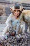 小逗人喜爱的猴子 库存照片